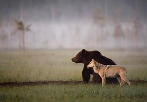 A Bear and a Wolf Formed an Unlikely Friendship Worthy of a Disney Movie