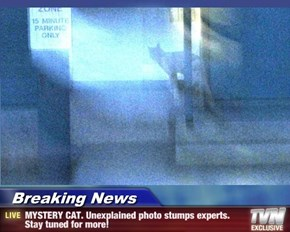 Breaking News - MYSTERY CAT. Unexplained photo stumps experts. Stay tuned for more!