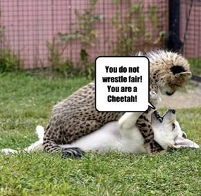 Cheetah, Cheetah, Cheetah!