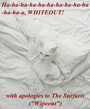 "Ha-ha-ha-ha-ha-ha-ha-ha-ha-ha-ha-ha-a, WHITEOUT!  with apologies to The Surfaris (""Wipeout"")"
