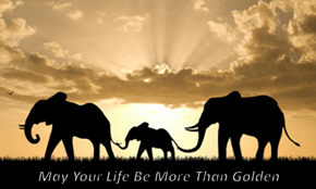 May Your Life Be More Than Golden