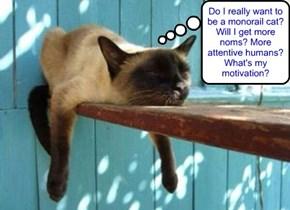 Monorail cat has existential crises