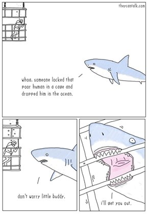 Sharks Are Our Friends