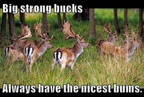 Big strong bucks  Always have the nicest bums.
