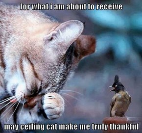for what i am about to receive  may ceiling cat make me truly thankful