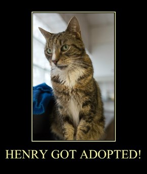 HENRY GOT ADOPTED!