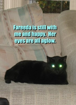 Fareeda is still with me and happy.  Her eyes are all aglow.