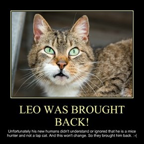 LEO WAS BROUGHT BACK!