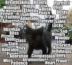 What is a Black Feline?