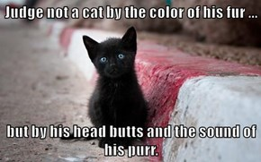 Judge not a cat by the color of his fur ...  but by his head butts and the sound of his purr.