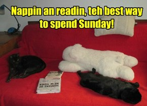 Nappin an readin, teh best way to spend Sunday!