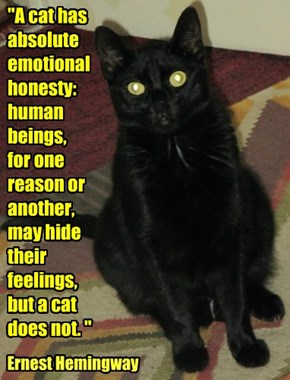 """A cat has absolute emotional honesty: human beings,  for one reason or another, may hide their feelings, but a cat does not. """