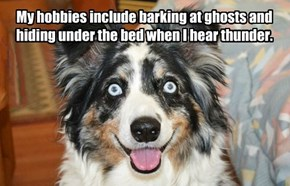 My hobbies include barking at ghosts and hiding under the bed when I hear thunder.