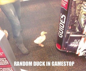 Isn't That Just Ducky?