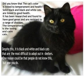 About Black Cats