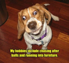 My hobbies include chasing after balls and running into furniture.