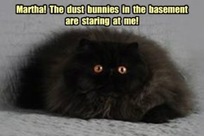 Martha!  The  dust  bunnies  in  the  basement  are  staring  at  me!