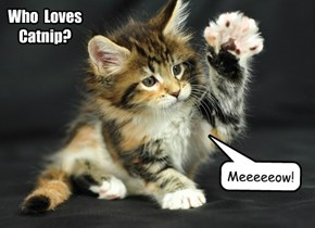 Who  Loves  Catnip?