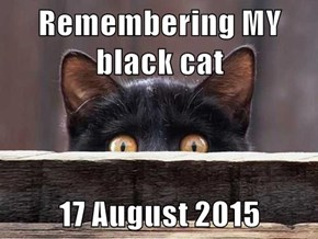 Remembering MY black cat  17 August 2015