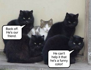 Black cats don't discriminate.