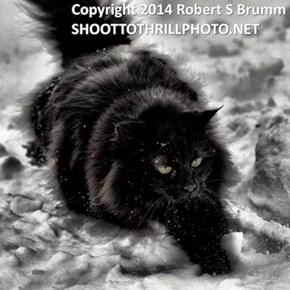 "Angela Currie Brumm's (aka dragonsbridge) cat, ""Mistress of The Dark"" Hateful. Copyrighted"