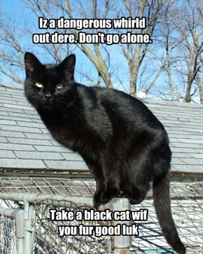 For good luck, have a black cat