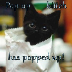 Pop up       kitteh  has popped up!