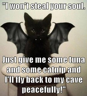 """""""I won't steal your soul.  Just give me some tuna and some catnip and I'll fly back to my cave peacefully!"""""""