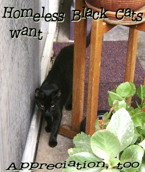 Homeless Black Cats Want Appreciation, Too
