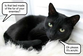 Black cats get tired of being misunderstood.