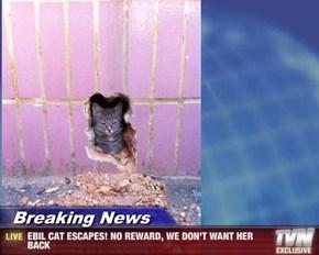 Breaking News - EBIL CAT ESCAPES! NO REWARD, WE DON'T WANT HER BACK