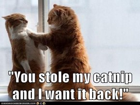 """""""You stole my catnip and I want it back!"""""""