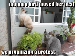 momma bird moved her nest                                    we organizing a protest