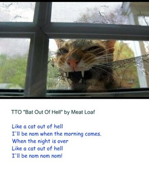 """""""Cat Out Of Hell"""" (TTO """"Bat Out Of Hell"""" by Meat Loaf)"""