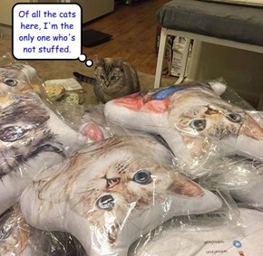 Of all the cats here, I'm the only one who's not stuffed