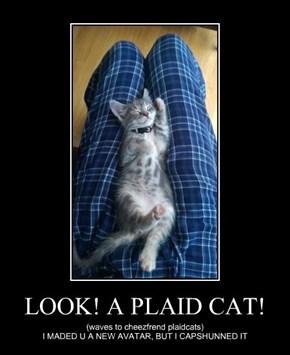 LOOK! A PLAID CAT!
