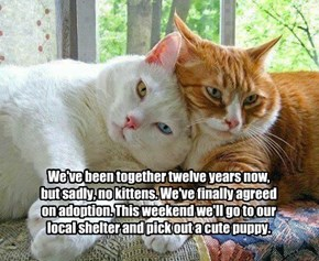We've been together twelve years now, but sadly, no kittens. We've finally agreed on adoption. This weekend we'll go to our local shelter and pick out a cute puppy.