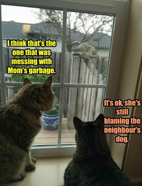 It's ok, she's still blaming the neighbour's dog.