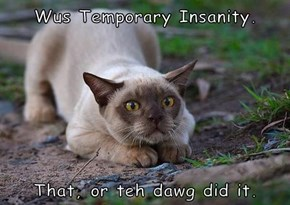 Wus Temporary Insanity.   That, or teh dawg did it.