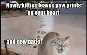 Nawty kittie sez its his pawtograf!
