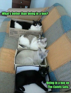 What's better than being in a box?                                                                                              Being in a box on                                                                                The Comfy Sofa.