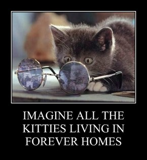 IMAGINE ALL THE KITTIES LIVING IN FOREVER HOMES