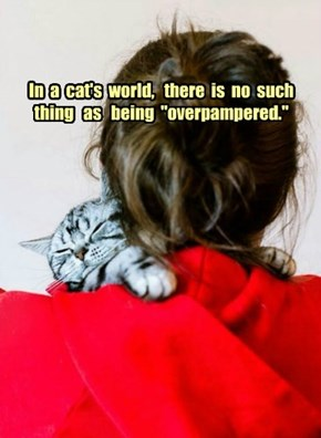 "In  a  cat's  world,   there  is  no  such  thing   as   being  ""overpampered."""