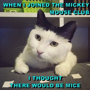 WHEN I JOINED THE MICKEY MOUSE CLUB  I THOUGHT                              THERE WOULD BE MICE