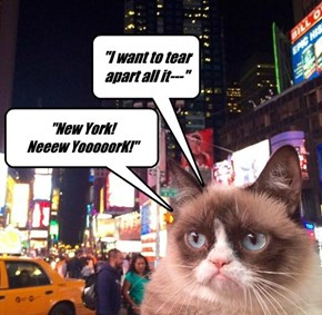 Cats on Broadway--- Not now, not ever!