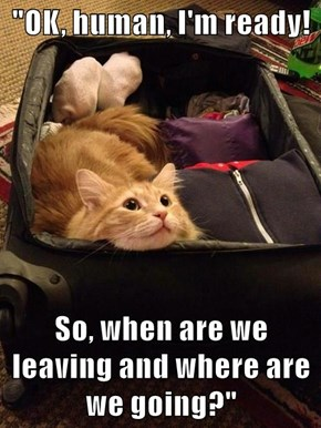 """OK, human, I'm ready!  So, when are we leaving and where are we going?"""