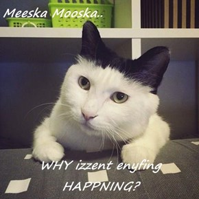 Meeska Mooska..  WHY izzent enyfing HAPPNING?