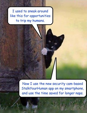 If cats used cell phones #2