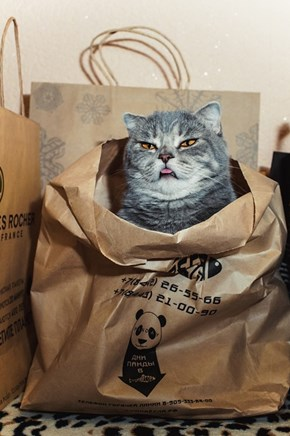This Bag Only Stores Cats Now