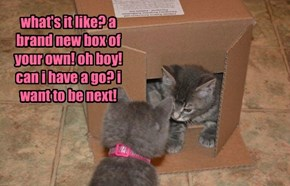 what's it like? a brand new box of your own! oh boy! can i have a go? i want to be next!